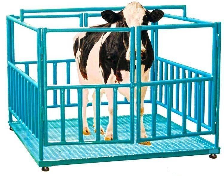 Весы платформенные для взвешивания животных